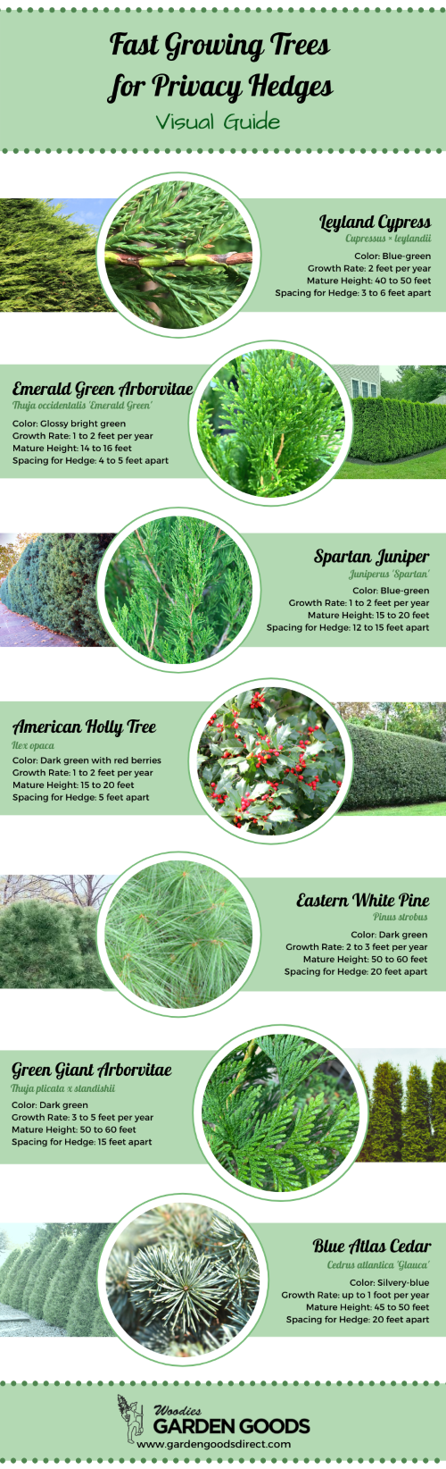 visual guide of fast growing trees for a privacy hedge