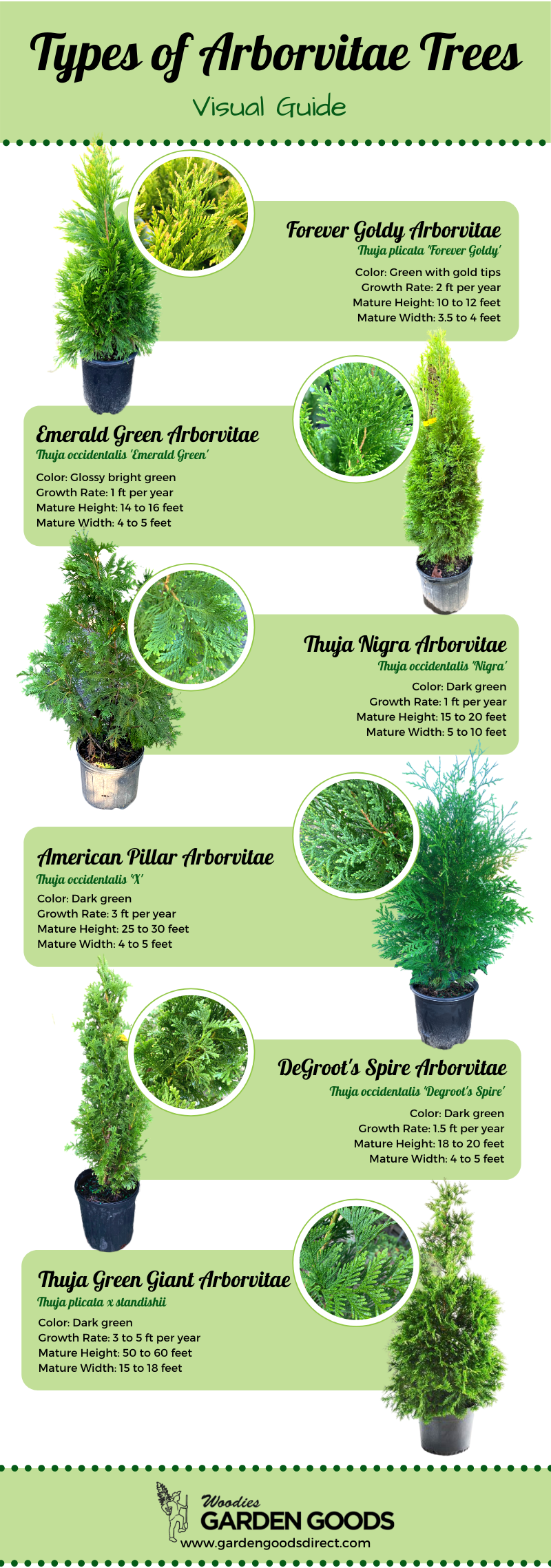 types of arborvitae trees visual guide
