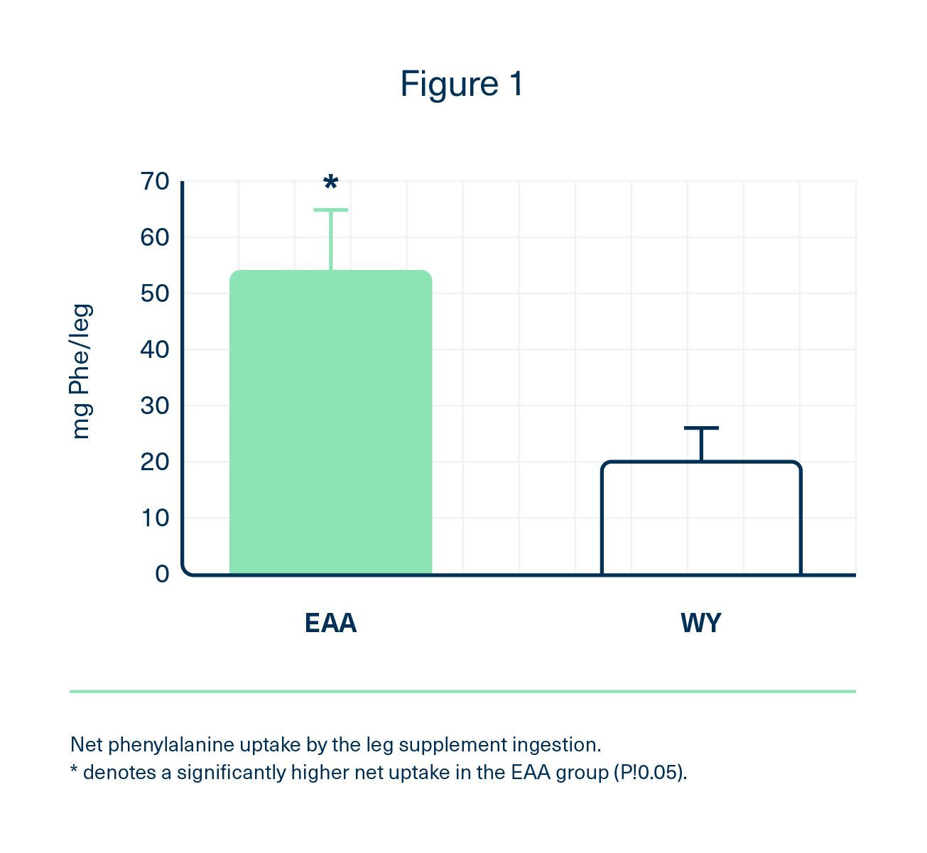 Net phenylalanine uptake by the leg supplement ingestion