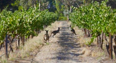 australie vin bio biodynamie nature