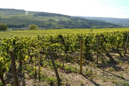 bourgogne vin bio biodynamie naturel