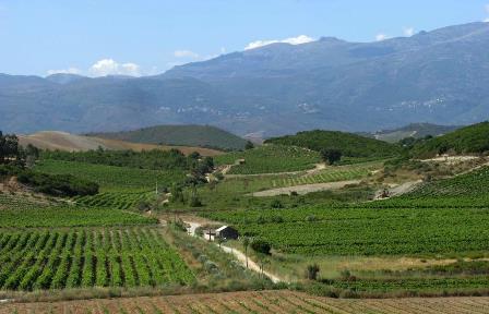 corse provence vins bio biodynamie naturel