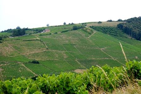 coups de coeur vins bio biodynamie naturel