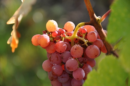 jus fruits vinaigres raisins bio naturel