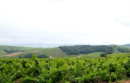 meilleures ventes vins bio naturels biodynamiques