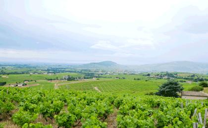 nouveautés vins bio, biodynamiques, nature vignes