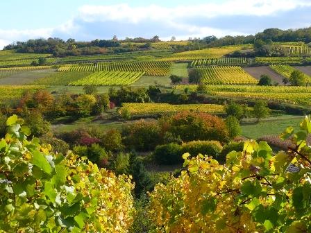 offre promo lot vignes vin bio naturel