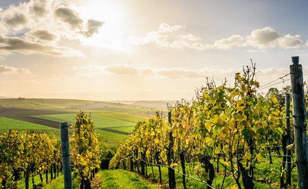 dessert vin sucre bio naturel biodynamie