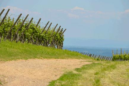 regions vignes vin bio biodynamie nature