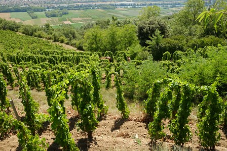 cotes du rhone vin bio biodynamie naturel