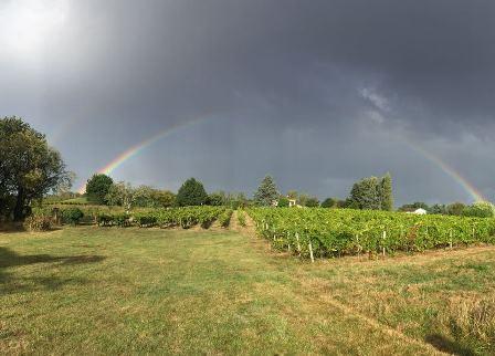 vigne Sud-Ouest vin bio nature biodynamie