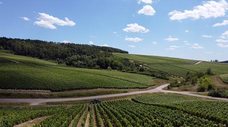 champagne vignes vin bio nature biodynamie