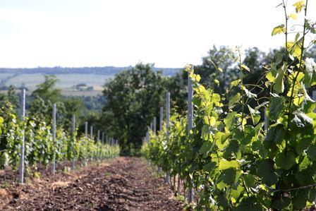 auvergne vin bio nature biodynamique