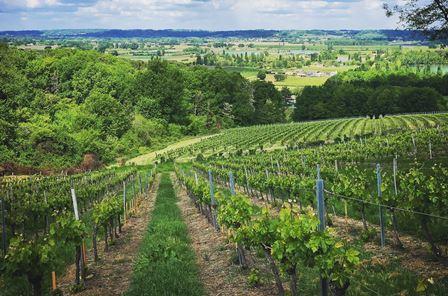 bordeaux bordelais vin bio nature biodynamie