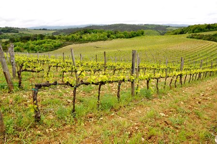 vin bio biodynamie naturel italien italie sicile
