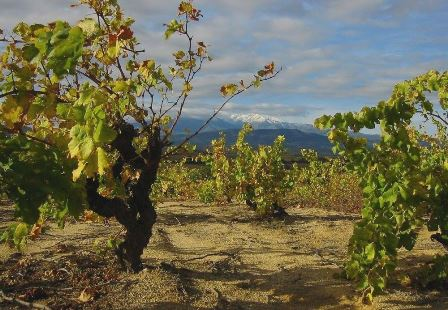 vin bio biodynamie naturel roussillon pyrenees orientales