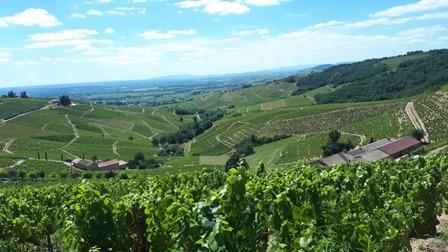 vins bio biodynamie naturel beaujolais