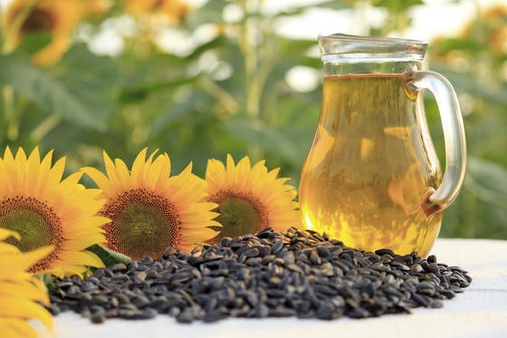 Image result for helianthus annuus (sunflower) seed oil